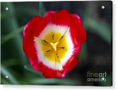 Acrylic Print featuring the photograph Tiny Fireball by Thanh Tran