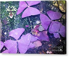 Tiny Frog Acrylic Print by Tammy Herrin