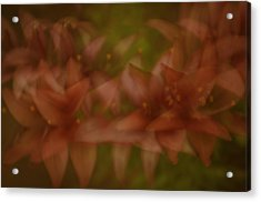 Acrylic Print featuring the photograph Tiny Ghost Lily by Sherri Meyer
