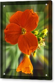 Acrylic Print featuring the photograph Tiny Orange Flower by Debbie Portwood