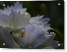 Tiny Spider On White Flower Acrylic Print by Scott McGuire