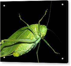 To An Insect Pretty Katydid Acrylic Print by Tracie Kaska