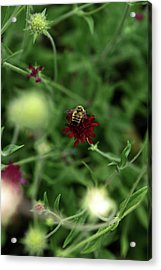 Acrylic Print featuring the photograph To Bee by Lorraine Devon Wilke
