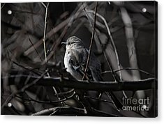 To Kill A Mockingbird Acrylic Print by Lois Bryan