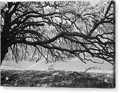 To Lie Here With You Would Be Heaven Acrylic Print by Laurie Search