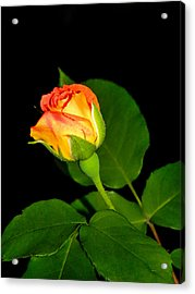 Acrylic Print featuring the photograph To My Beloved by Ester  Rogers
