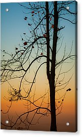 To The Morning Acrylic Print