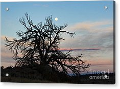 To The Tune Of A Blue Moon Acrylic Print by Wesley Hahn