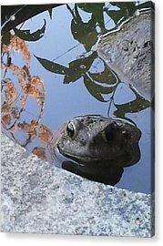 Toad Beauty Acrylic Print