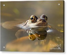 Toad Of Toad Hall Acrylic Print by Clare Scott
