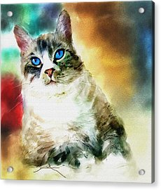 Toby The Cat Acrylic Print by Robert Smith