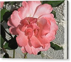 Today It's Pink Acrylic Print by Louise Mingua