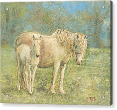 Together New Forest Pony And Foal Acrylic Print by Richard James Digance