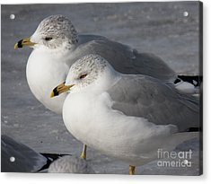 Togetherness Acrylic Print by Judy Via-Wolff