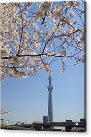 Tokyo Sky Tree Acrylic Print by Hisako Hatakeyama