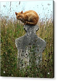 Tombstone Cat Acrylic Print by Still Watters