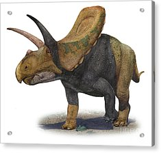Torosaurus Latus, A Prehistoric Era Acrylic Print by Sergey Krasovskiy