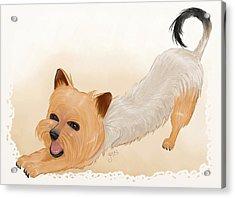 Totchi Stretching Acrylic Print by Joana Silva