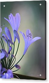 Touch Of Light Acrylic Print