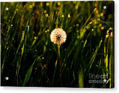 Acrylic Print featuring the photograph Touch Of Nature by Everett Houser