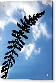 Acrylic Print featuring the photograph Touch The Sky by Lucy D