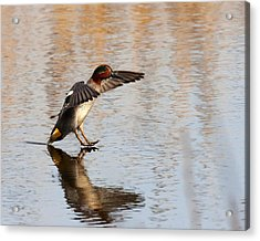 Acrylic Print featuring the photograph Touchdown by Paul Scoullar