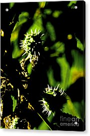 Acrylic Print featuring the photograph Touched By The Late Afternoon Sun by Steve Taylor