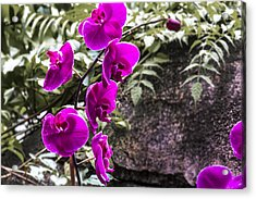 Touched Acrylic Print by Nicholas Evans