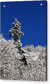 Towering Tree On Snow Covered Mountain Acrylic Print