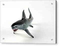 Toy Shark Acrylic Print by Photo Researchers, Inc.