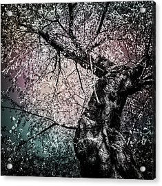Tracing The Constellations Acrylic Print by Anthony Rego