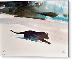 Track Of The Cat Acrylic Print by Ed