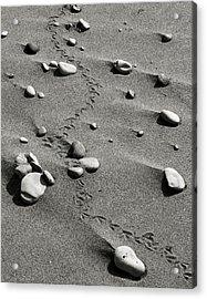 Tracks And Rocks Acrylic Print by Brady D Hebert