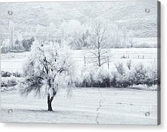 Tracks In The Frost Acrylic Print by Mike  Dawson