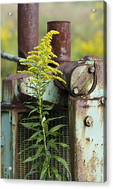 Acrylic Print featuring the photograph Tractor by Carrie Cranwill