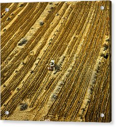 Tractor Cultivating Field Acrylic Print by Daniel Blatt
