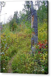 Acrylic Print featuring the photograph Trail Sign by Jim Sauchyn