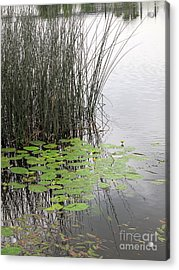 Tranquil Lillypads Of Spring Acrylic Print by Michelle Bergersen