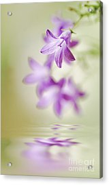 Tranquil Spring Acrylic Print by Jacky Parker