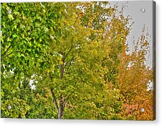 Acrylic Print featuring the photograph Transition Of Autumn Color by Michael Frank Jr