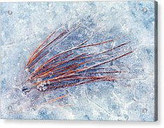Trapped In Winter Acrylic Print by Mike  Dawson