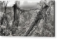 Trapped Acrylic Print by JC Findley