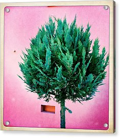 Tree And Colorful Pink Wall Acrylic Print by Matthias Hauser