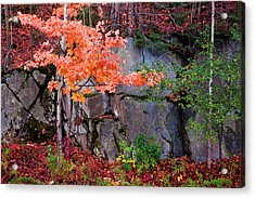 Tree And Rock Acrylic Print by Tom Singleton