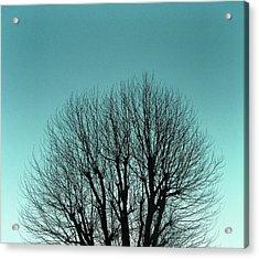 Tree And Sky Acrylic Print by Richard Newstead