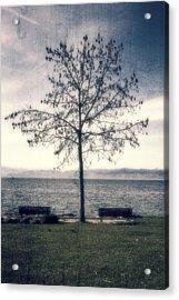 tree at lake Constance Acrylic Print by Joana Kruse
