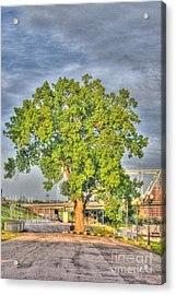 Tree At Newport On The Levee Acrylic Print