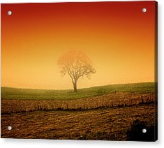Tree At Sunset And Misty Acrylic Print