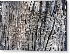 Acrylic Print featuring the photograph Tree Bark No. 1 Stress Lines by Lynn Palmer
