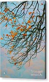 Tree Branches In Autumn Acrylic Print by Gabriela Insuratelu